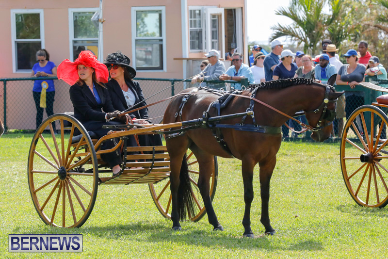 Ag-Show-at-Botanical-Gardens-Bermuda-April-21-2018-2368