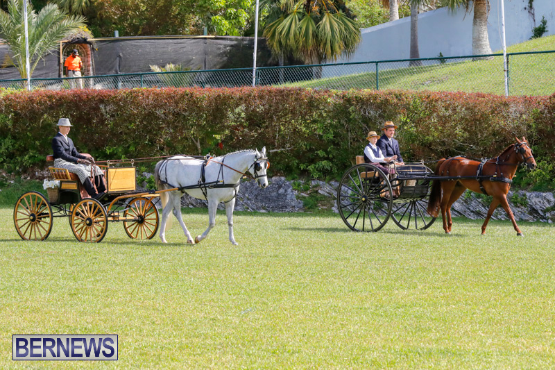 Ag-Show-at-Botanical-Gardens-Bermuda-April-21-2018-2373