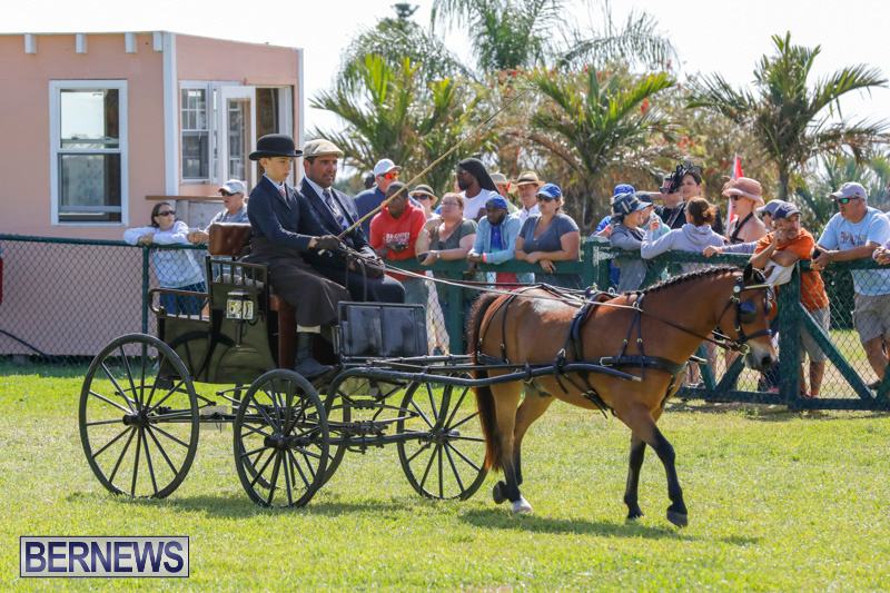 Ag-Show-at-Botanical-Gardens-Bermuda-April-21-2018-2436