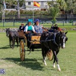 Ag Show at Botanical Gardens Bermuda, April 21 2018-2513