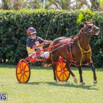 Ag Show at Botanical Gardens Bermuda, April 21 2018-2566