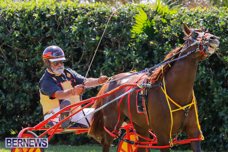 Ag-Show-at-Botanical-Gardens-Bermuda-April-21-2018-2567