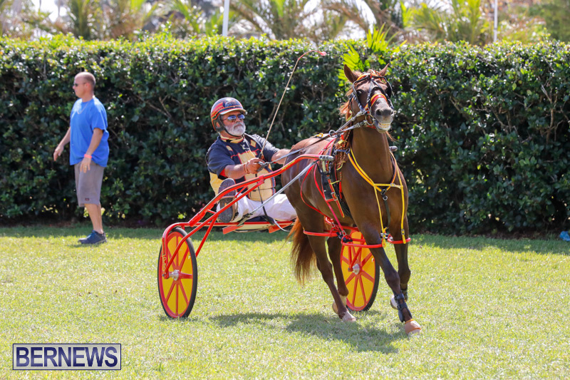 Ag-Show-at-Botanical-Gardens-Bermuda-April-21-2018-2587