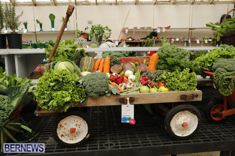 Agricultural-Show-Bermuda-Day-1-April-19-2018-19