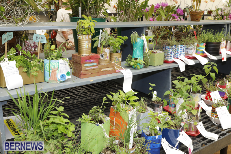 Agricultural-Show-Bermuda-Day-1-April-19-2018-37