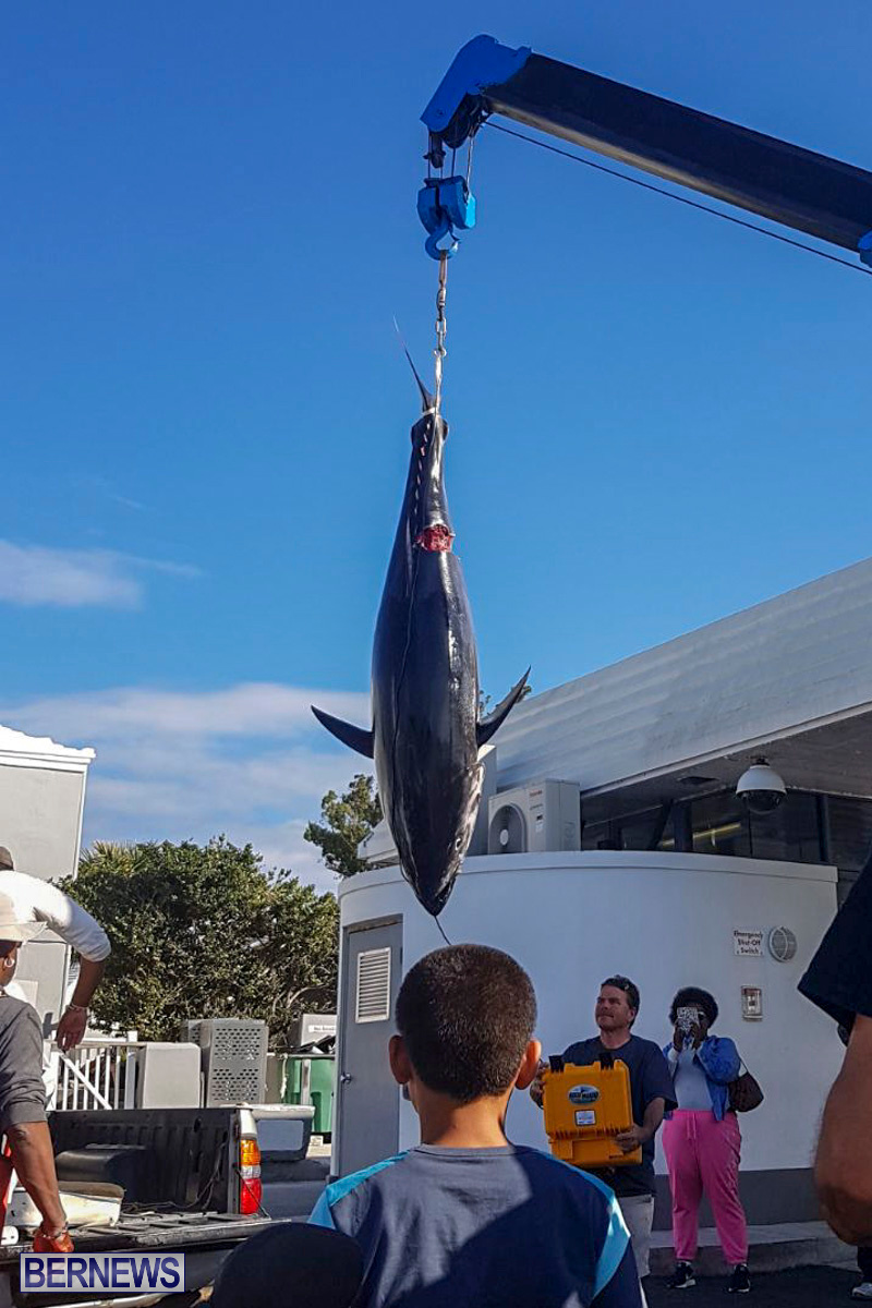 Bobby Lambe 431lb Pound Bluefin Tuna Bermuda, April 22 2018-2-3