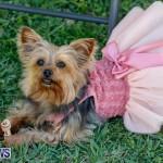 CedarBridge Academy Pet Pageant Bermuda, April 22 2018-6727