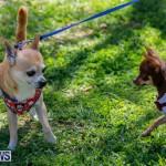 CedarBridge Academy Pet Pageant Bermuda, April 22 2018-6749