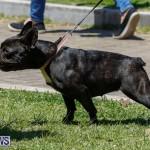 CedarBridge Academy Pet Pageant Bermuda, April 22 2018-6771
