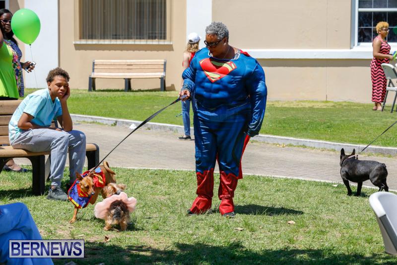 CedarBridge-Academy-Pet-Pageant-Bermuda-April-22-2018-6773