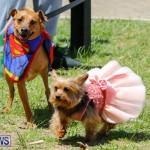 CedarBridge Academy Pet Pageant Bermuda, April 22 2018-6775