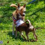 CedarBridge Academy Pet Pageant Bermuda, April 22 2018-6779