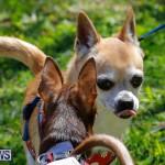 CedarBridge Academy Pet Pageant Bermuda, April 22 2018-6782