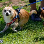 CedarBridge Academy Pet Pageant Bermuda, April 22 2018-6794