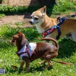 CedarBridge Academy Pet Pageant Bermuda, April 22 2018-6795