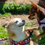 CedarBridge Academy Pet Pageant Bermuda, April 22 2018-6802