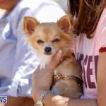 CedarBridge Academy Pet Pageant Bermuda, April 22 2018-6817