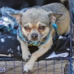 CedarBridge Academy Pet Pageant Bermuda, April 22 2018-6838