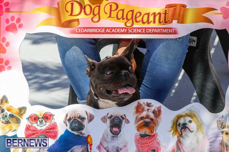 CedarBridge-Academy-Pet-Pageant-Bermuda-April-22-2018-6861