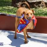 CedarBridge Academy Pet Pageant Bermuda, April 22 2018-6896