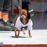 CedarBridge Academy Pet Pageant Bermuda, April 22 2018-6945