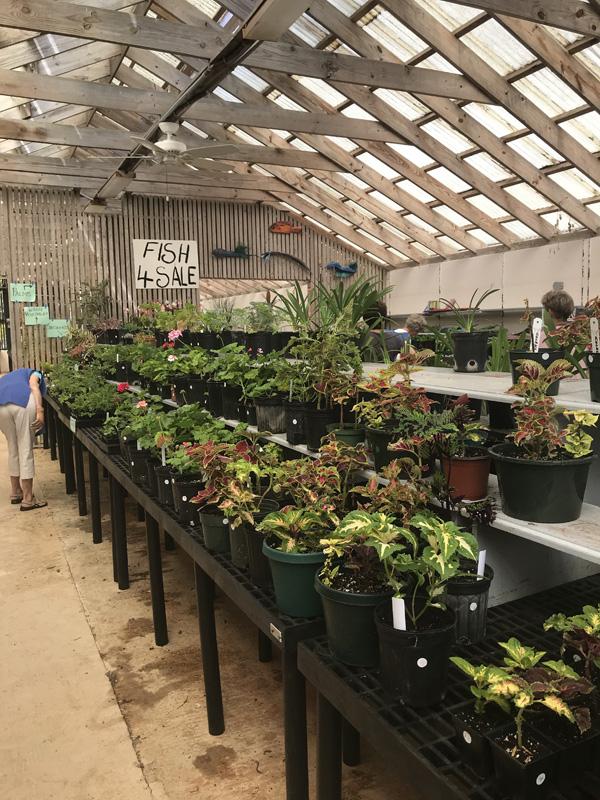 Garden Club's Plant Sale Bermuda April 2018 (1)