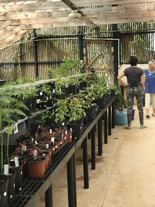 Garden Club's Plant Sale Bermuda April 2018 (3)