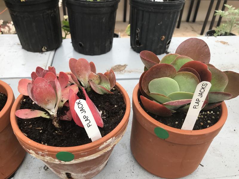 Garden Club's Plant Sale Bermuda April 2018 (5)