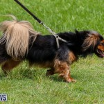 Paws To The Park at the Arboretum Bermuda, May 12 2018-3238