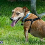 Paws To The Park at the Arboretum Bermuda, May 12 2018-3263
