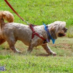 Paws To The Park at the Arboretum Bermuda, May 12 2018-3271