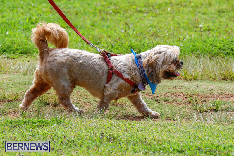 Paws-To-The-Park-at-the-Arboretum-Bermuda-May-12-2018-3271
