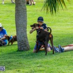 Paws To The Park at the Arboretum Bermuda, May 12 2018-3274