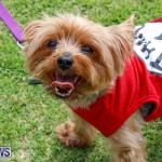 Paws To The Park at the Arboretum Bermuda, May 12 2018-3280