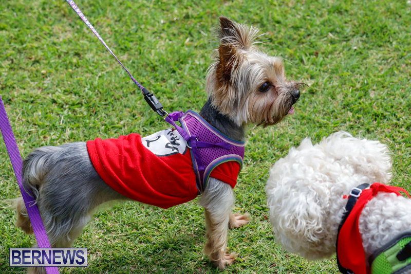 Paws-To-The-Park-at-the-Arboretum-Bermuda-May-12-2018-3282