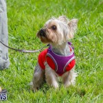 Paws To The Park at the Arboretum Bermuda, May 12 2018-3292
