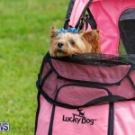Paws To The Park at the Arboretum Bermuda, May 12 2018-3363