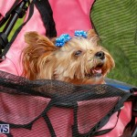 Paws To The Park at the Arboretum Bermuda, May 12 2018-3367