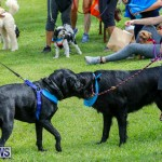 Paws To The Park at the Arboretum Bermuda, May 12 2018-3377