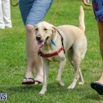 Paws To The Park at the Arboretum Bermuda, May 12 2018-3381