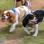 Paws To The Park at the Arboretum Bermuda, May 12 2018-3392
