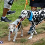 Paws To The Park at the Arboretum Bermuda, May 12 2018-3399