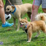 Paws To The Park at the Arboretum Bermuda, May 12 2018-3410