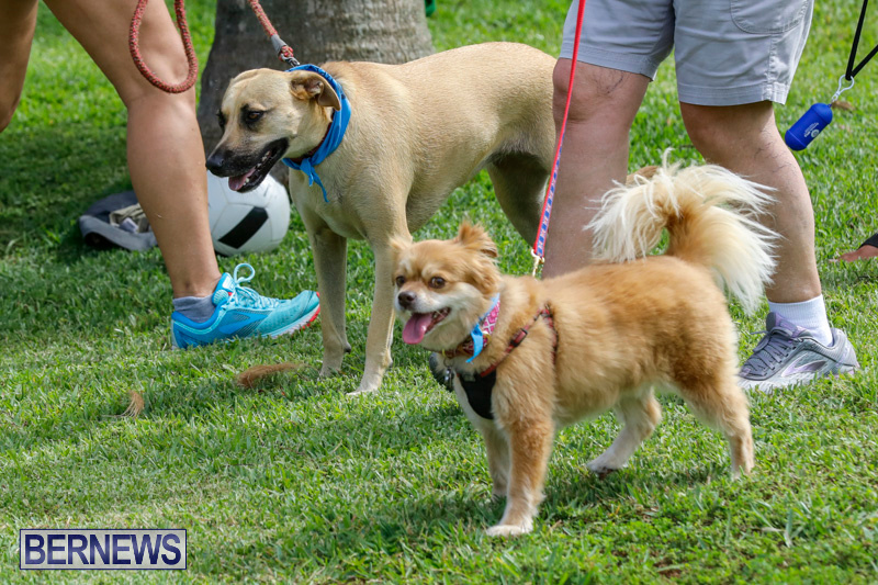 Paws-To-The-Park-at-the-Arboretum-Bermuda-May-12-2018-3410