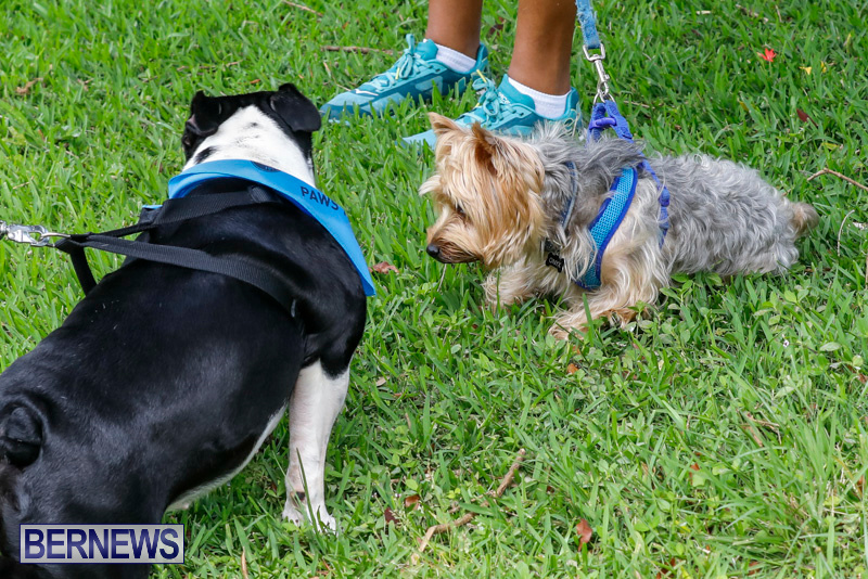 Paws-To-The-Park-at-the-Arboretum-Bermuda-May-12-2018-3440