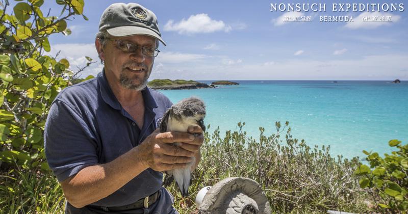 Sunny Cahow Bermuda May 31 2018 (2)