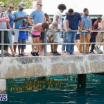 Rubber Duck Derby Bermuda, June 3 2018-2-446