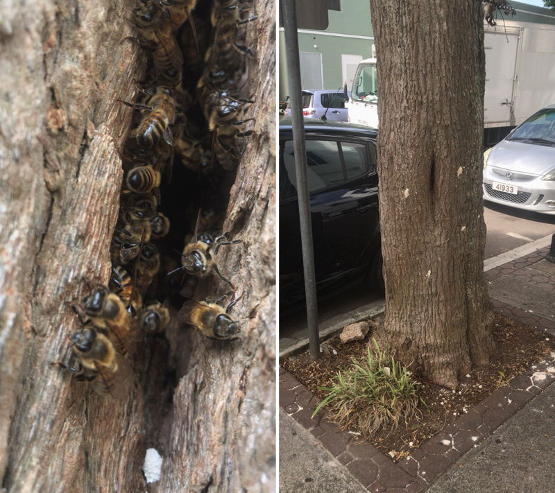 Bee Hive Bermuda July 2018 (2)