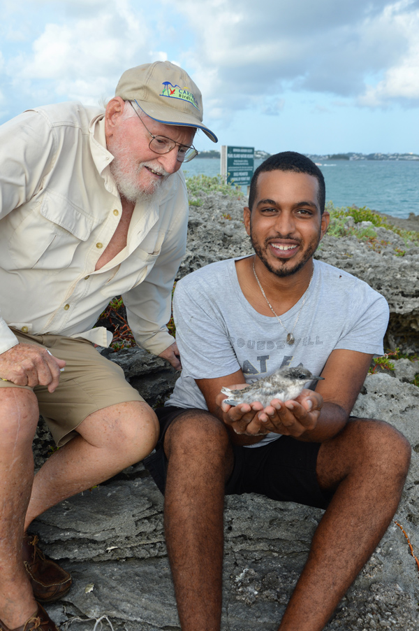 Roseate Tern Bermuda August 2018 (1)