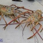 Lobster Tournament Makin Waves Goslings Bermuda, September 2 2018-3818